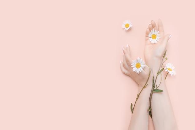 Le mani delle donne con il concetto di cosmetici naturali di fiori di camomilla. copia spazio
