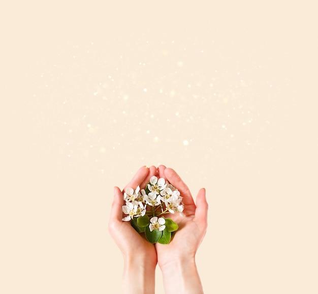 Mani delle donne con fiori di melo bianco tra le palme su uno sfondo rosa champagne. tempo di primavera, amore, tenerezza. cura della pelle, cosmetici naturali. banner, spazio per il testo