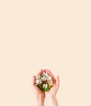 Mani delle donne con fiori di melo bianco tra le palme su uno sfondo rosa champagne. tempo di primavera, amore, tenerezza. cura della pelle, cosmetici naturali.
