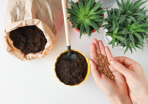 Le mani delle donne tengono i semi per piantarli in un vaso di fiori