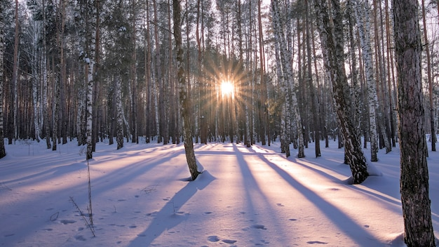 Meraviglioso tramonto nella foresta invernale