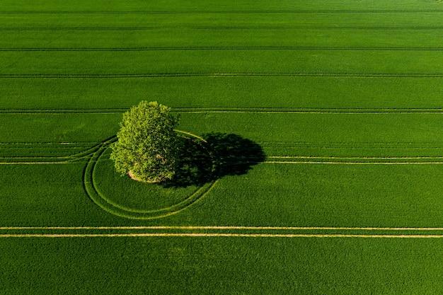 Splendida vista dall'alto su albero solitario in un prato verde, perfetta luce pomeridiana, ombre e colori