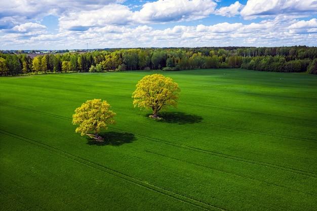 Splendida vista dall'alto su due querce in un prato verde e bosco, perfetta luce pomeridiana, ombre e colori