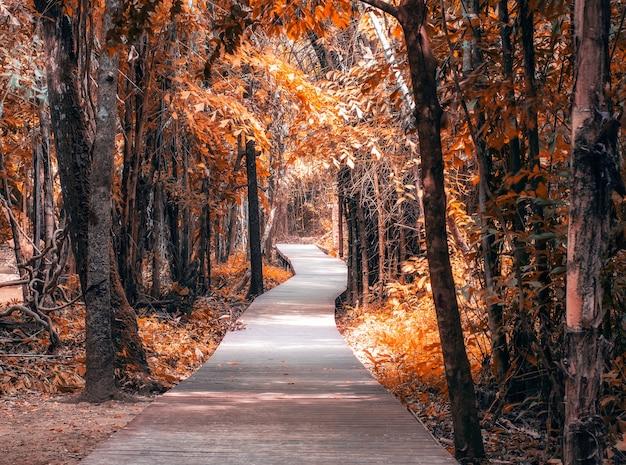 Percorso di legno nella foresta d'autunno