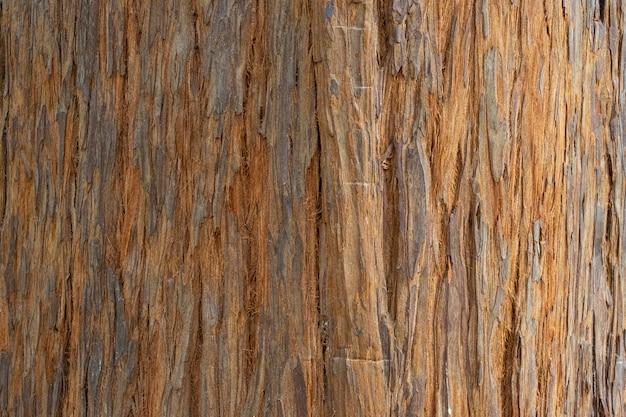 Struttura del legno sequoiadendron giganteum (sequoia gigante conosciuta anche come sequoia gigante, sequoia della sierra, sequoia della sierra, wellingtonia o semplicemente big tree) tronco o tronco con corteccia