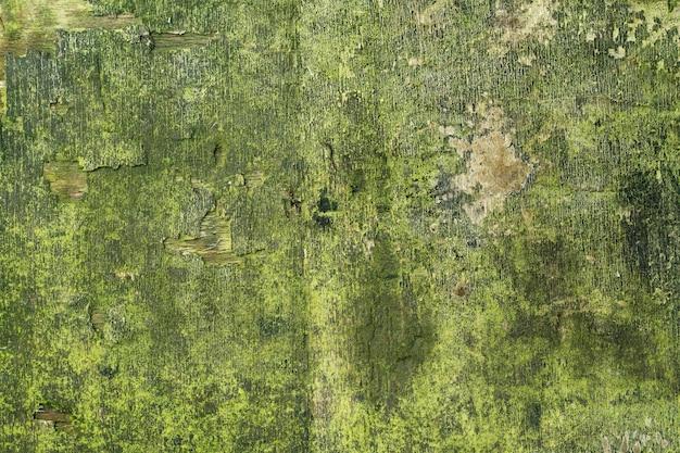 Struttura in legno, con aspetto invecchiato, vecchio e verde