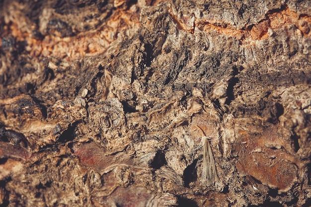 Struttura di legno, corteccia di legno, sfondo naturale marrone astratto con sfocatura, dente di leone su fondo di legno