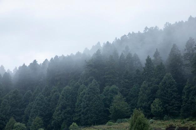 Montagna boscosa con nebbia tra gli alberi in messico