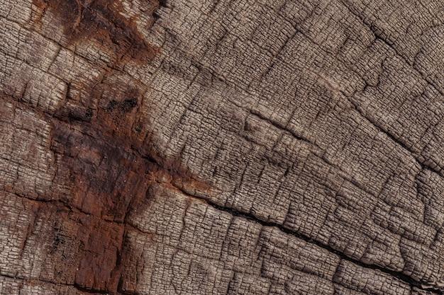 Fondo di legno da un naufragio nella costa di scheletro in namibia.