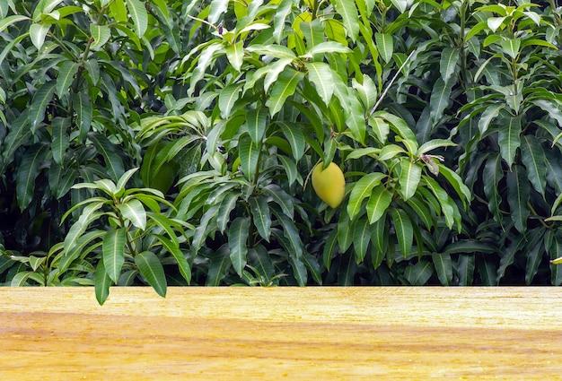 Tavola vuota in legno davanti a un albero di mango (mangifera indica) con foglie verdi e frutti per l'esposizione del prodotto