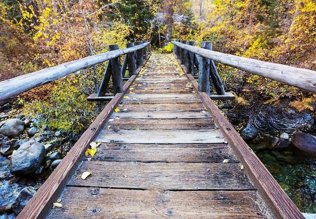 Passerella in legno attraverso la foresta d'autunno