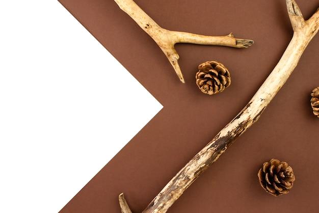 Rami di legno, pigne piatte giacevano su marrone e bianco
