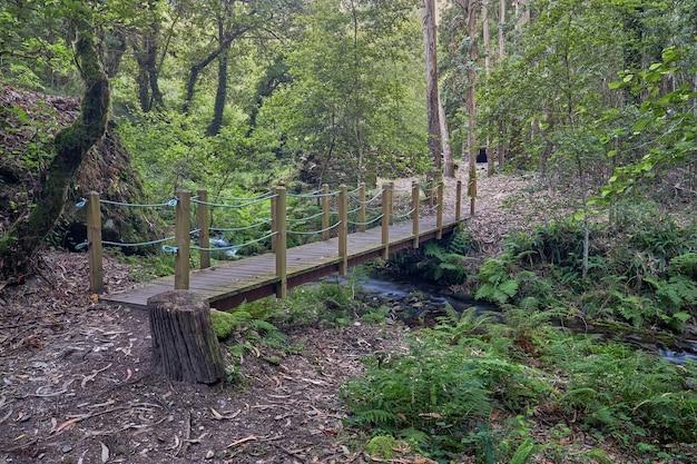Ponte di legno su un piccolo fiume nel mezzo di una foresta in galizia.