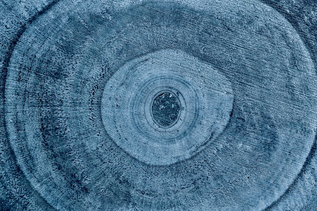 Struttura in legno dettagliata del tronco d'albero tagliato o ceppo, primo piano.