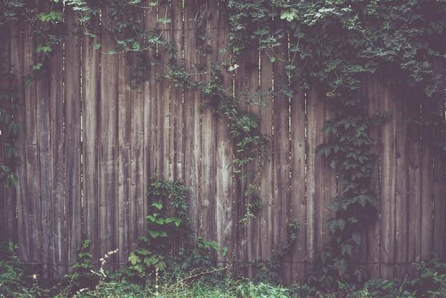 Recinzione in legno ricoperta da cornice di viti di edera naturale. effetto tonificante realizzato con un filtro in stile instagram retrò vintage.