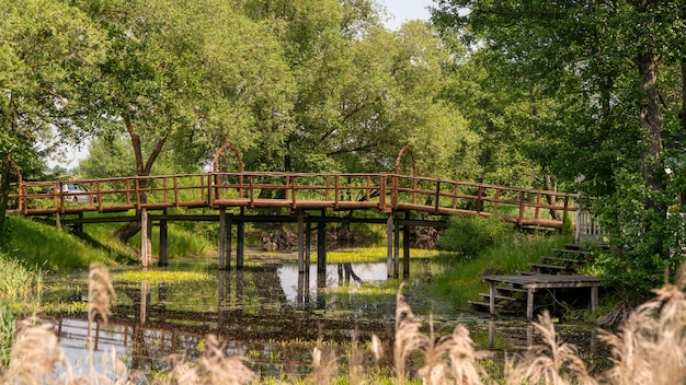 Alto ponte in legno su un letto del fiume invaso dalla vegetazione