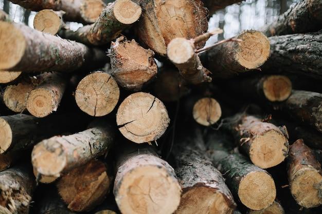 Sfondo di tronchi di legno tagliato naturale.