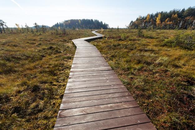 Percorso di legno che attraversa le zone umide paludose in autunno.