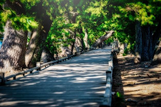 La passerella in legno tra pino al tramonto in miho no matsubara, prefettura di shizuoka, giappone.