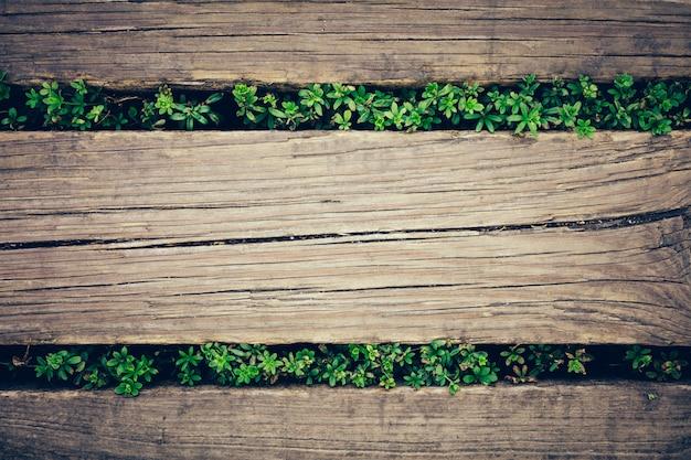 Tavole di legno con piante che sbirciano attraverso.