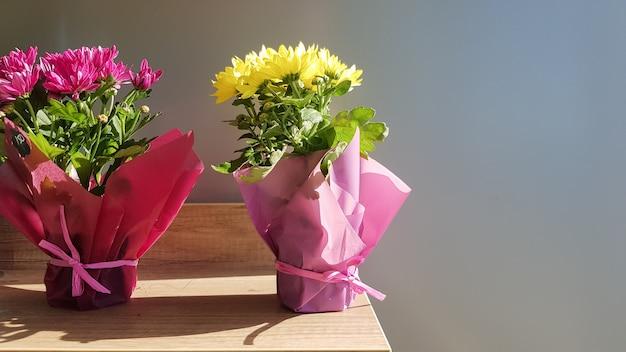 Su uno scaffale di legno in un vaso, due piante vive nella vetrina di un negozio di fiori.