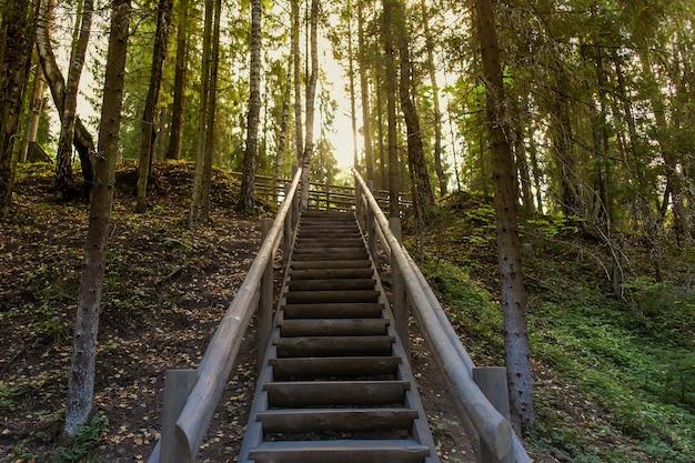 Scala in legno nei boschi, estate