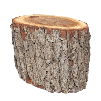 Ceppo di legno isolato su sfondo bianco.