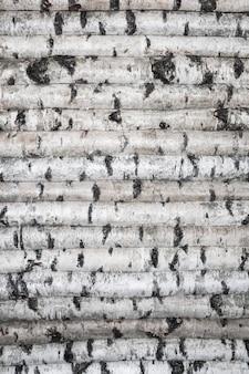 Parete in legno di tronchi di betulla. sfondo maculato di alberi. foto di alta qualità