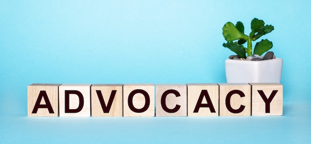 La parola advocacy è scritta su cubi di legno vicino a un fiore in un vaso su uno sfondo azzurro