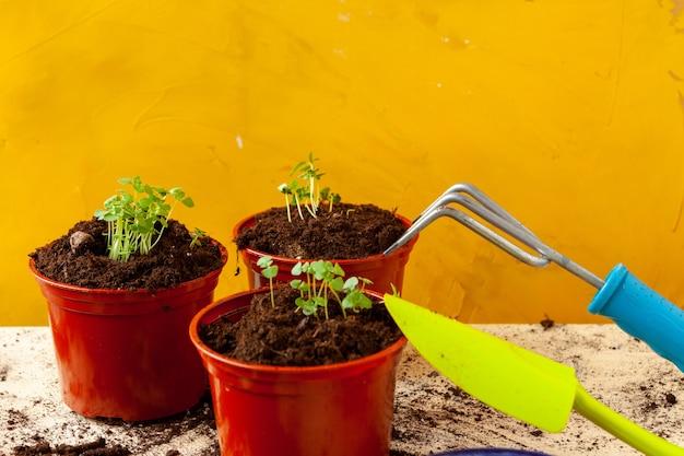 Lavora in giardino, piantando vasi da vicino
