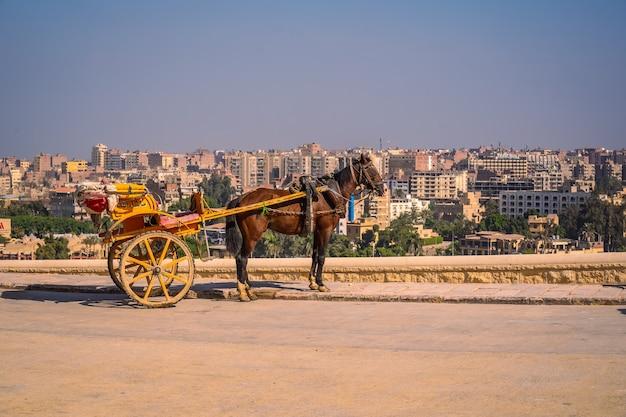 Lavoratori con cavalli alle piramidi di giza il più antico monumento funerario del mondo. nella città del cairo, in egitto