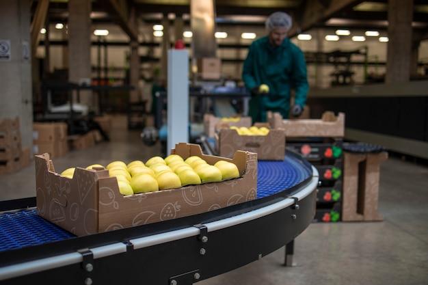 Lavorando nella fabbrica di alimenti biologici che smistano mele verdi e trasportano il nastro trasportatore alla cella frigorifera.