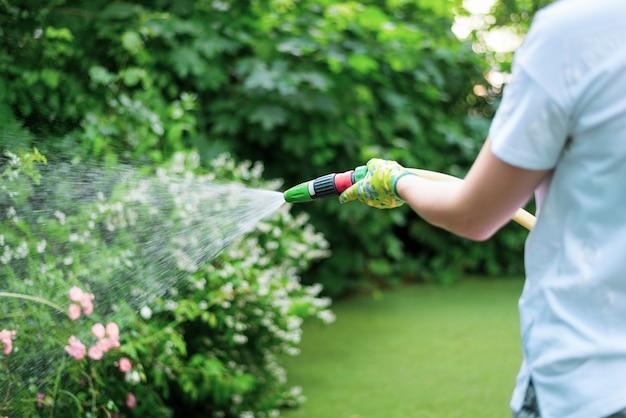 Giardino d'innaffiatura funzionante dal tubo flessibile. tubo da giardino manuale con getto d'acqua, fiori d'innaffiatura, primo piano, spruzzi d'acqua, progettazione del paesaggio