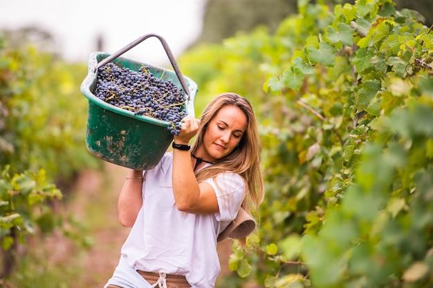 Donna lavoratrice in una vigna che porta una cassa d'uva sulla spalla