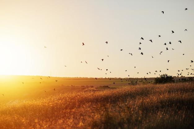 Concetto di ambiente mondiale. uccelli che volano sul prato nel tramonto estivo.