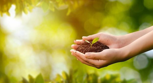 Concetto della giornata mondiale dell'ambiente: piantare alberi per salvare il mondo con mani umane che tengono piccoli alberi su uno sfondo sfocato del campo agricolo