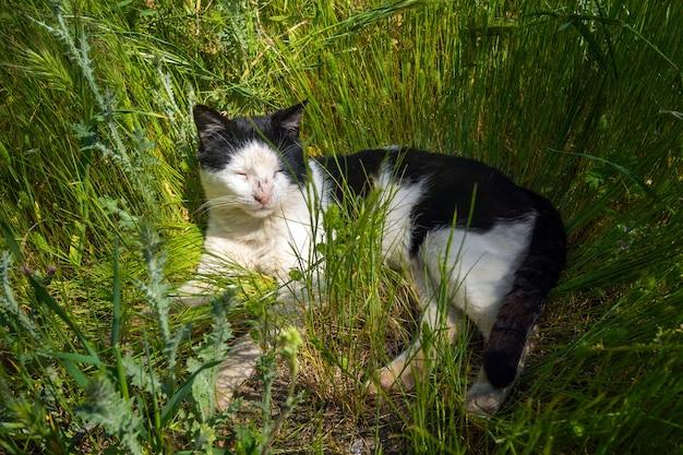 Gatto randagio ferito nell'erba