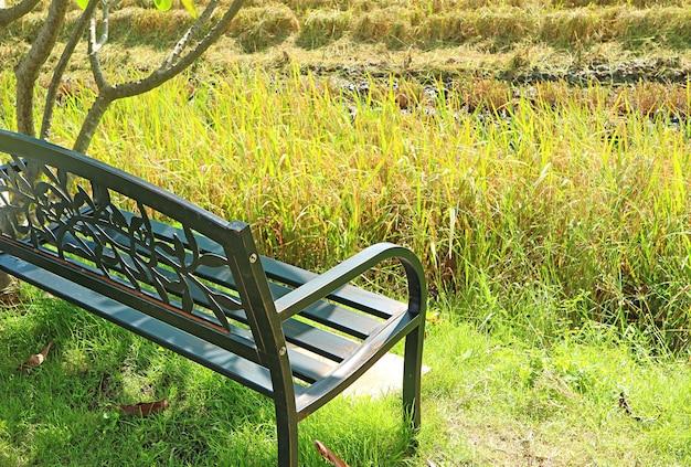 Panca in ferro battuto con risaie sfocate nella stagione del raccolto sullo sfondo