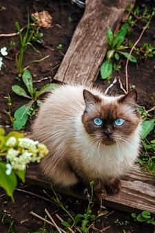 Un gatto da cortile è seduto per terra un bel gatto cammina fuori