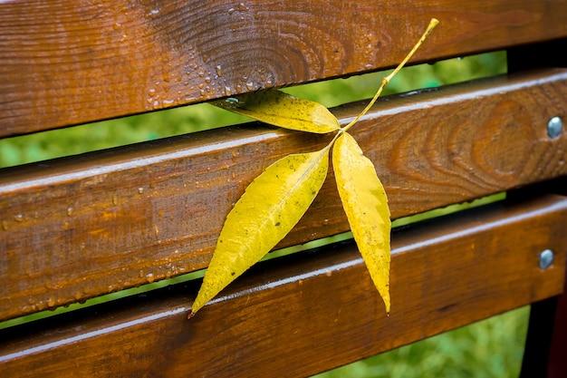 Foglia gialla autunnale della cenere conficcata tra le assi della panchina