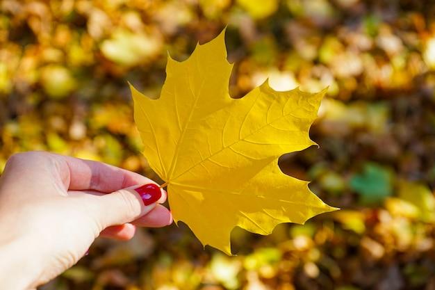 Foglia gialla di autunno in una mano femminile nel parco