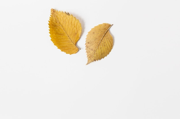 Foglie gialle autunnali lay flat spazio per textmokeup per design sfondo bianco. stile minimalista.