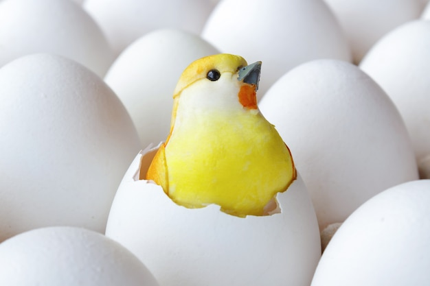 Giocattolo giallo del pulcino del bambino nel guscio d'uovo vuoto nel vassoio del cartone