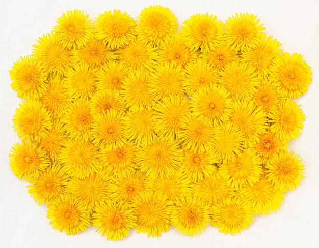 Sfondo giallo o cornice isolata di grandi denti di leone primaverili luminosi ravvicinati