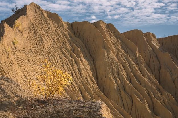 Betulla gialla nelle montagne del deserto di argilla nella città di cava elizavetino di gatchina