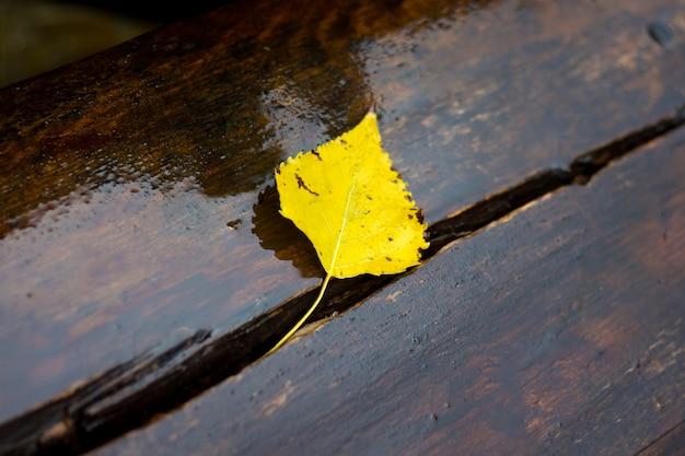 Foglia di betulla gialla su una panchina bagnata in un parco cittadino