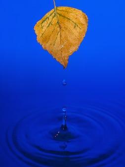 Foglie di betulla gialla sulla superficie dell'acqua