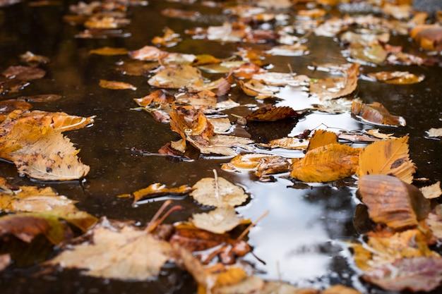 Foglie di autunno variopinte gialle in pozza sulla strada asfaltata