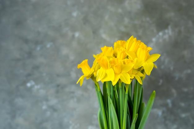 Narcisi gialli su sfondo grigio.