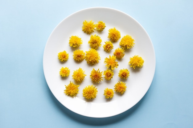 I fiori gialli del dente di leone si trovano in un piatto piatto bianco sul blu pastello